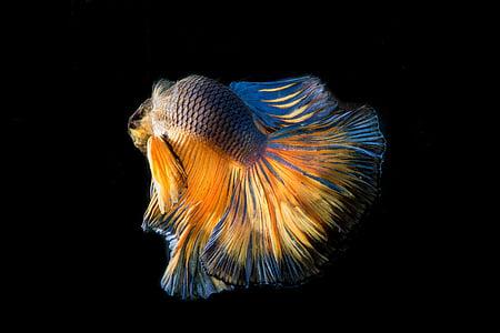 multicolored fish illustration