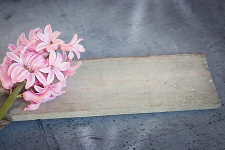 pink petaled flowers and brown wooden board
