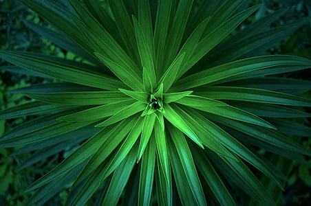 photo of green plant