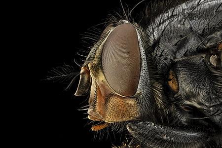 macro photography of common housefly