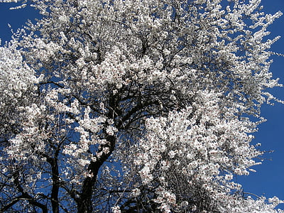 closeup photo of cherry blossom tree