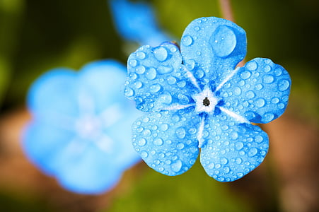 blue petaled flower on bloom