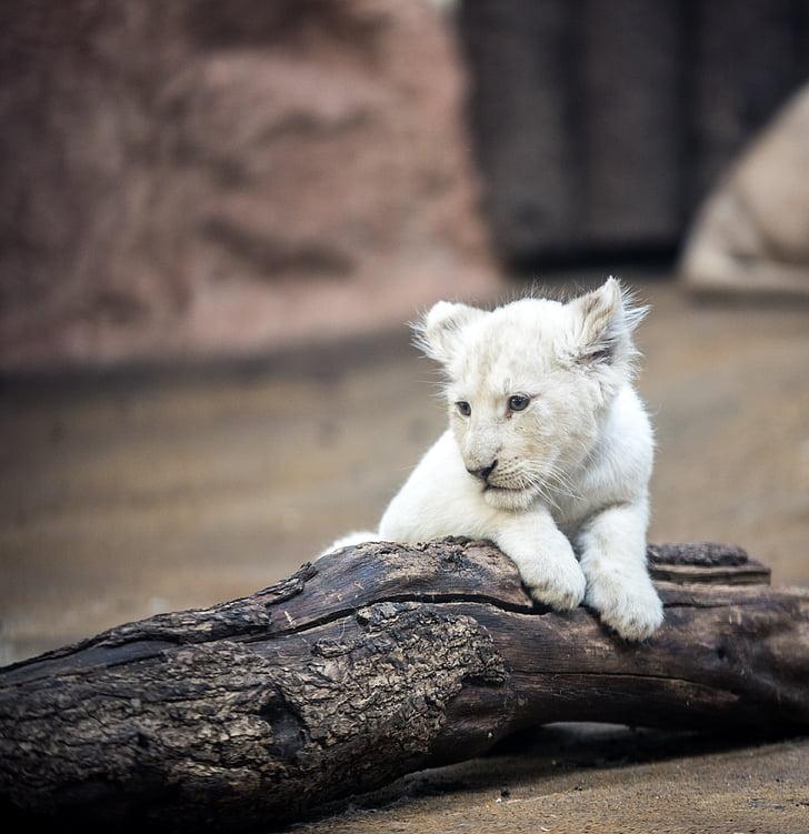 tiger cub on wood