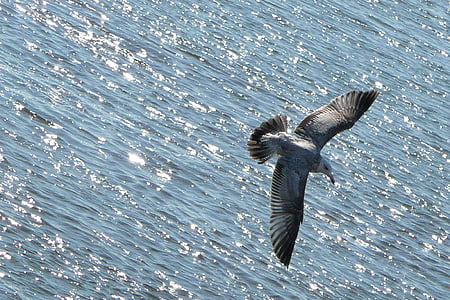 grey gull flying above ocean