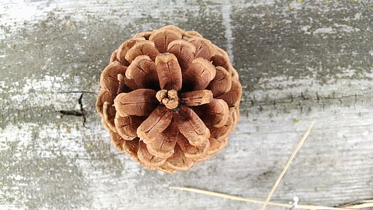 close-up photo of brown pinecone
