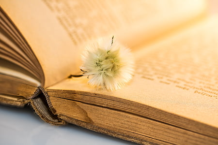 white petaled flower on book