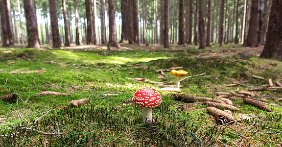 close up photography of red mushroom during day time
