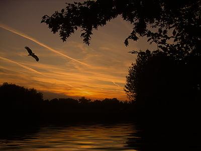 black bird flying during sunset