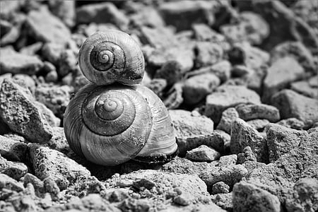 two snails grayscale photo
