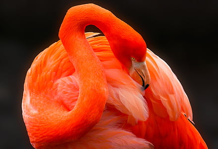 orange flamingo