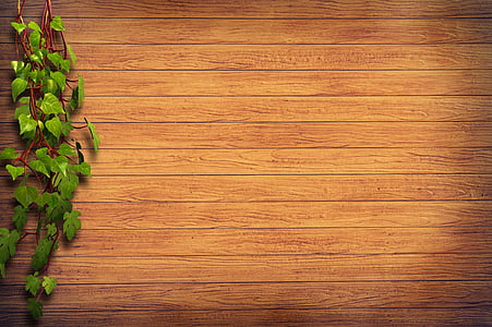 green plant on brown wooden wall