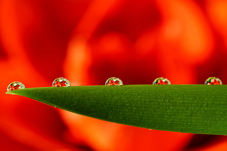 5 dew on green leaf in shallow focus photographyt
