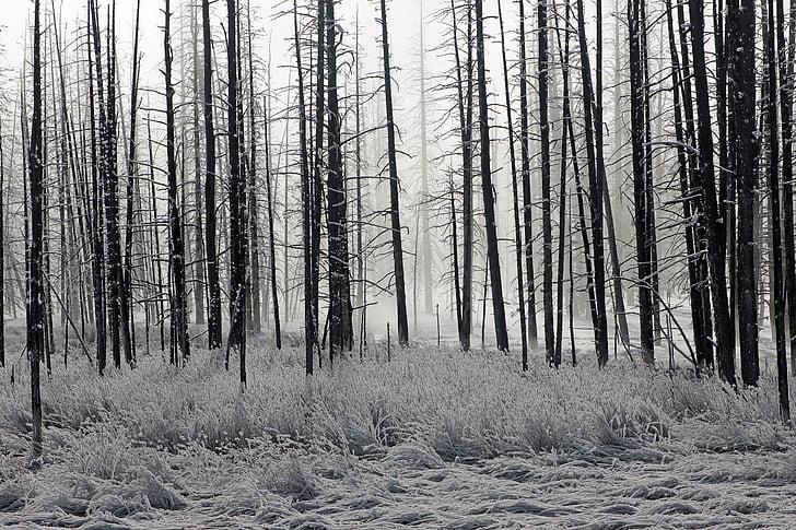 tree line grayscale photo