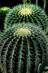 green and white cactus