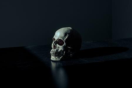 gray human skull