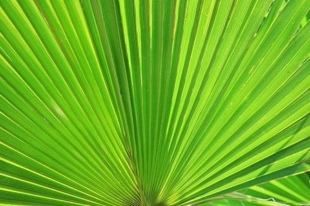 close-up photo of green fan plant