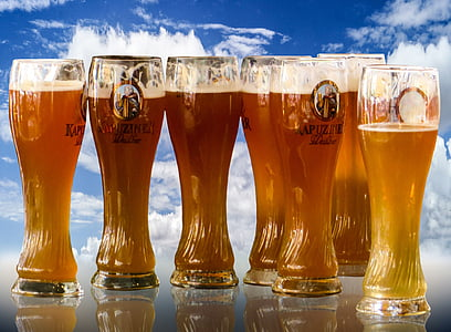 seven glass full of beers
