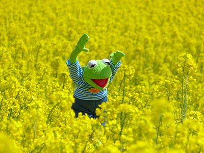 Kermit the Frog plush toy on greenfield