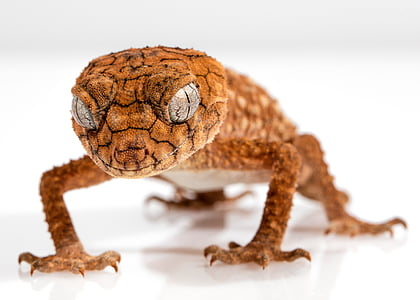 close up photography of brown lizard