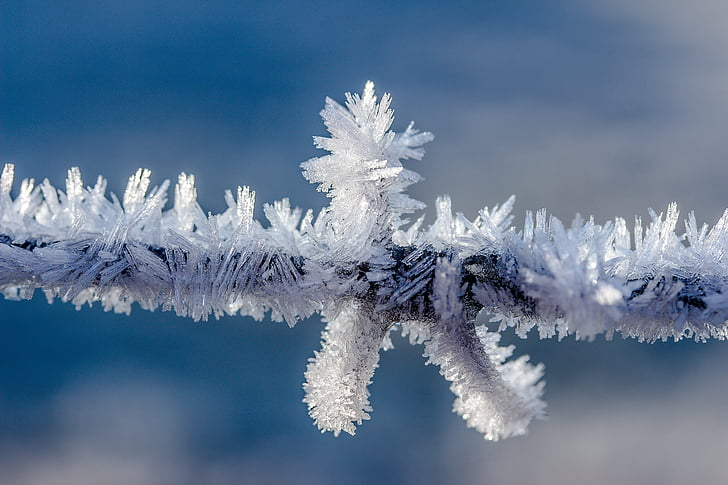 snowflakes on tree branch