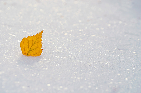 yellow leaf on white ice