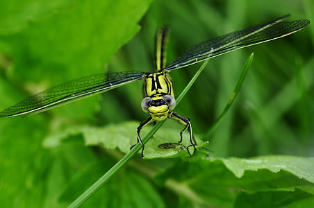green dragonfly on green leaves