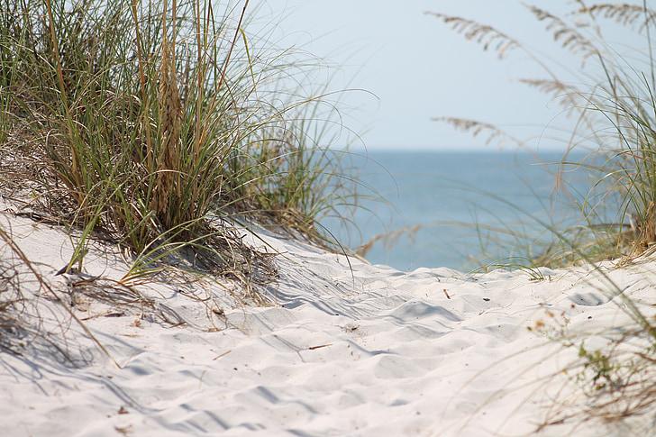 green grass near sea photography