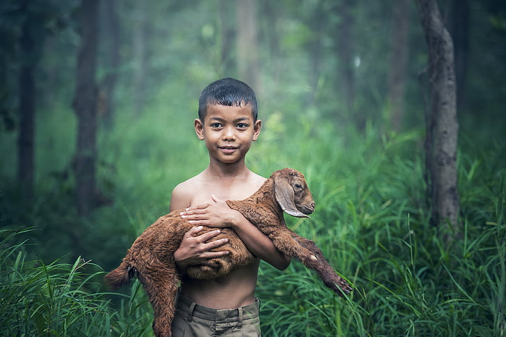 boy in gray shorts carrying a brown goat kid