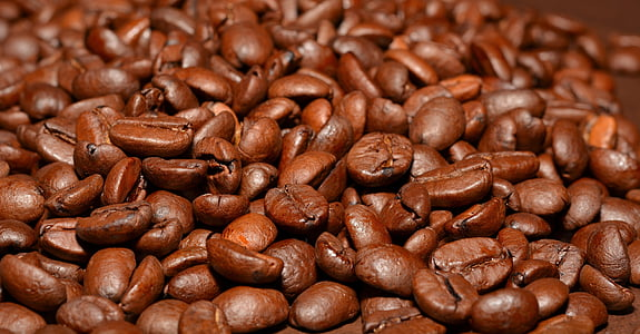 brown coffee seeds