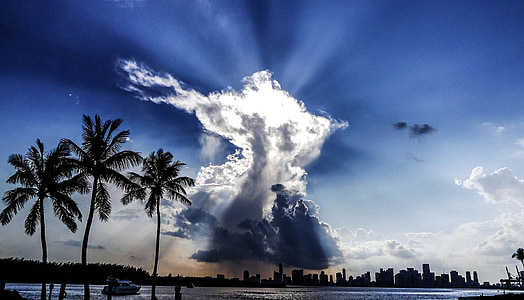 three green coconut palm trees near blue body of water under white clouds and blue sky