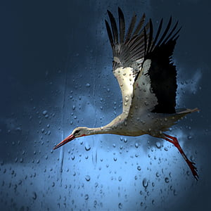 white, gray, and pink long-beak long-legged flying bird in front of clear surface with water dew