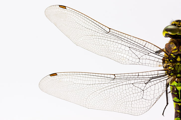 close-up photography of dragonfly wings
