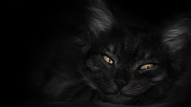 closeup photo of cat's face