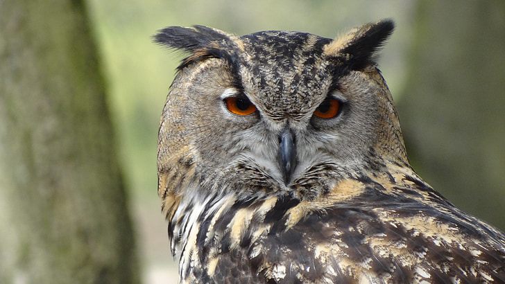 shallow depth of field photo of owl