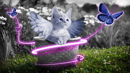 grey kitten with wings on basket