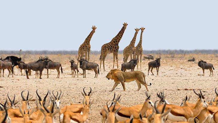 herd of animals during daytime