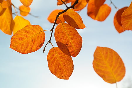 orange dried leaves attach from tree branch