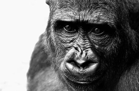 greyscale photo of monkey