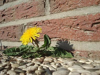 yellow dandelion flower near brick wall