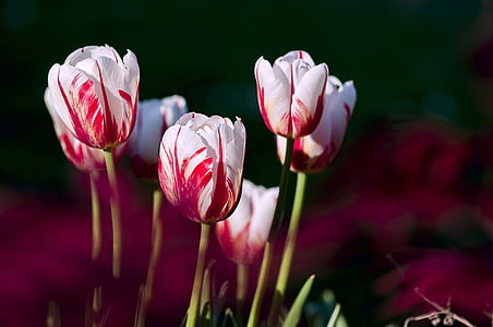 white-and-red petaled flower lot