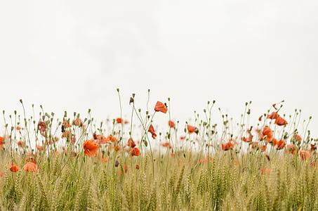 orange petaled flower field
