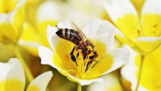 macro-photography of honeybee collecting pollen