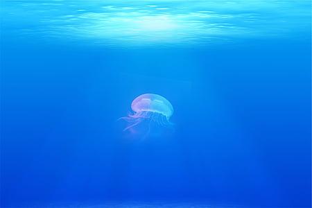 jellyfish under the ocean ]