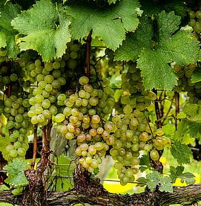 closeup photography of green grapes