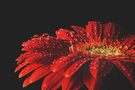 auto focus photography of red flower