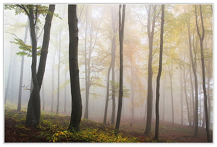 foggy woodland