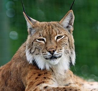 Feline photo