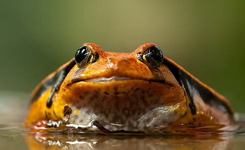 orange and black frog on shallow photography
