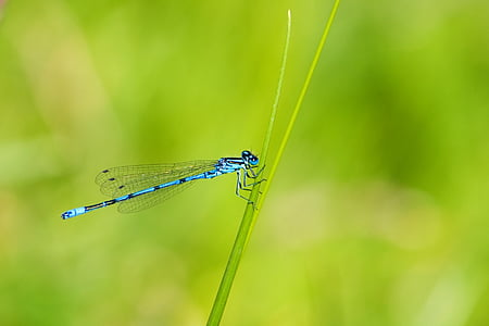 blue damselfly perched on green stem