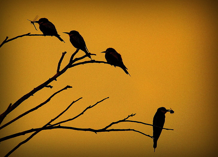 silhouette of four birds on tree branches